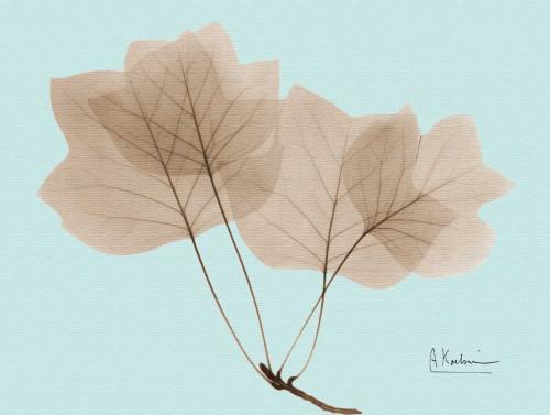 Tulip Tree in Brown on Blue Poster Print by Albert Koetsier - Item # VARPDXAKRC124A