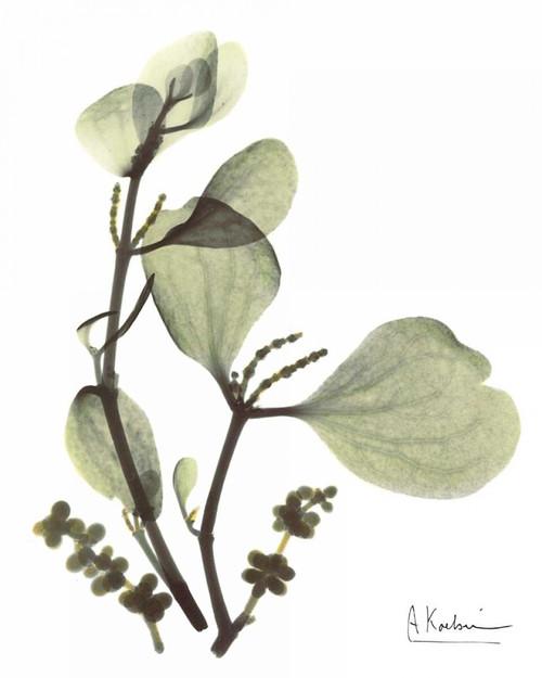 Mistle Toe in Green Poster Print by Albert Koetsier - Item # VARPDXAKRC202
