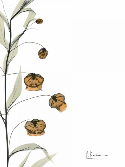 Sandersonia Bouquet  in Bloom Poster Print by Albert Koetsier - Item # VARPDXAKRC253