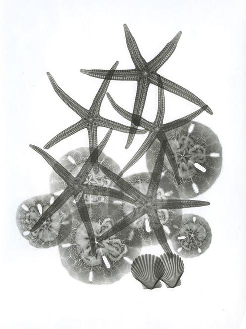 Sea Collection Poster Print by Albert Koetsier - Item # VARPDXAKRC605A