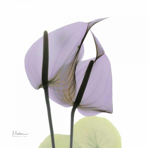 A Gift of Flowers in Lavender Poster Print by Albert Koetsier - Item # VARPDXAKXSQ315B