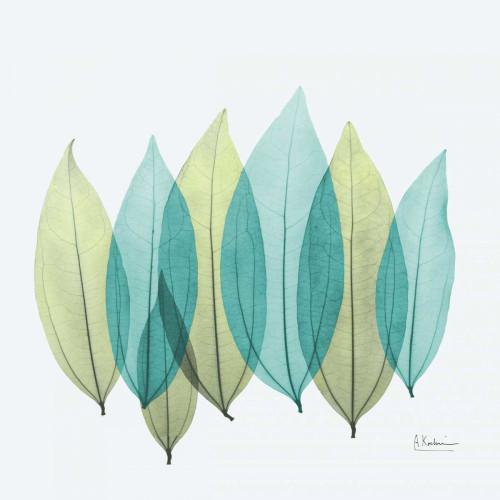 Coculus Leaf L348 Poster Print by Albert Koetsier - Item # VARPDXAKXSQ375B