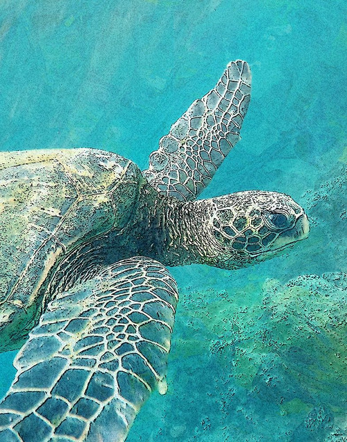 Sea Turtle 1 Poster Print by Ann Bailey - Item # VARPDXBARC037A