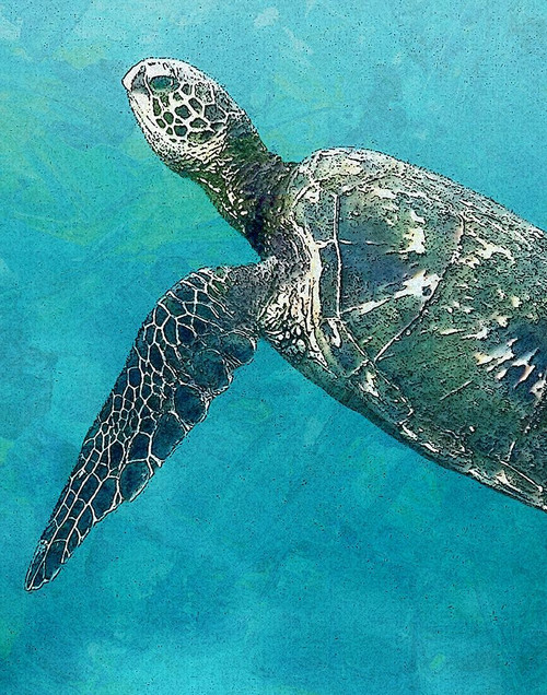 Sea Turtle 3 Poster Print by Ann Bailey - Item # VARPDXBARC037C
