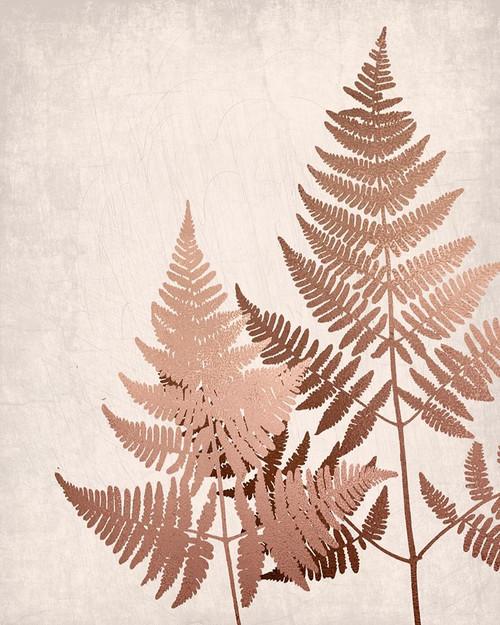 Copper Pink Ferns 2 Poster Print by Ann Bailey - Item # VARPDXBARC050B