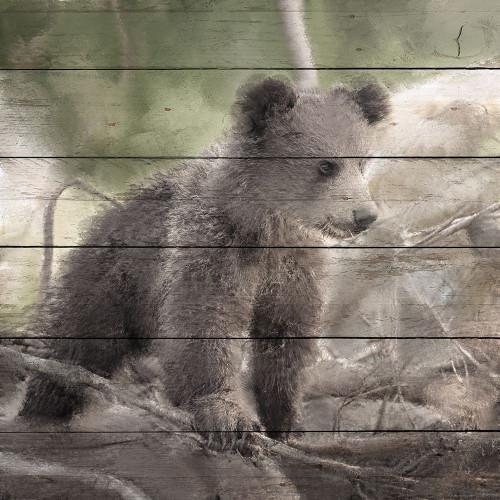 Bear Cub 1 Poster Print by Ann Bailey - Item # VARPDXBASQ006A