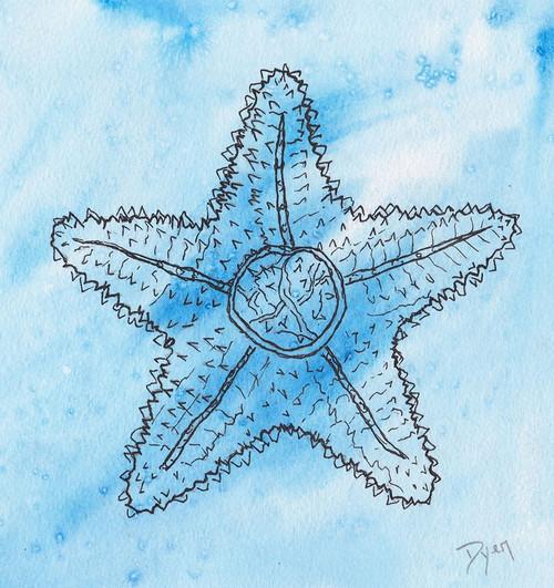 Coastal Starfish Poster Print by Beverly Dyer - Item # VARPDXBDSQ065A