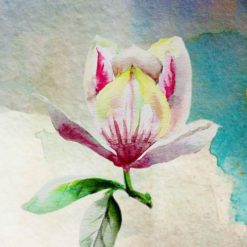 Solitary Magnolia Poster Print by Boho Hue Studio Boho Hue Studio - Item # VARPDXBHSSQ001C