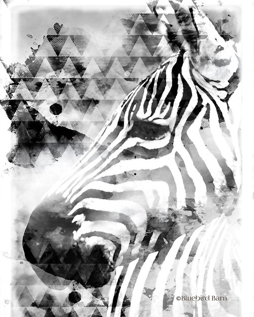 Modern Black & White Zebra      Poster Print by Bluebird Barn Bluebird Barn - Item # VARPDXBLUE145