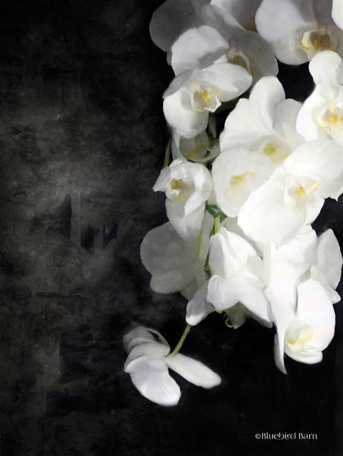 Contemporary White Orchids Poster Print by Bluebird Barn Bluebird Barn - Item # VARPDXBLUE240