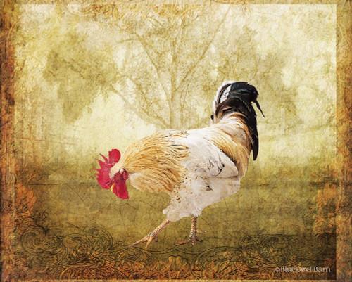 Vintage Scratching Rooster Poster Print by Bluebird Barn Bluebird Barn - Item # VARPDXBLUE252