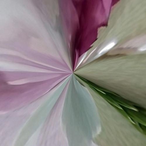 Botanical Beauty E Poster Print by Studio Nine6 Studio Nine6 - Item # VARPDXCA071929
