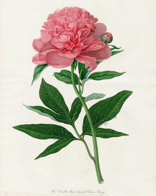 Botanical 3 Poster Print by Cynthia Alvarez - Item # VARPDXCCRC055C