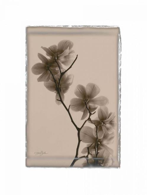 Magnolias Poster Print by Diane Stimson - Item # VARPDXDSRC211E