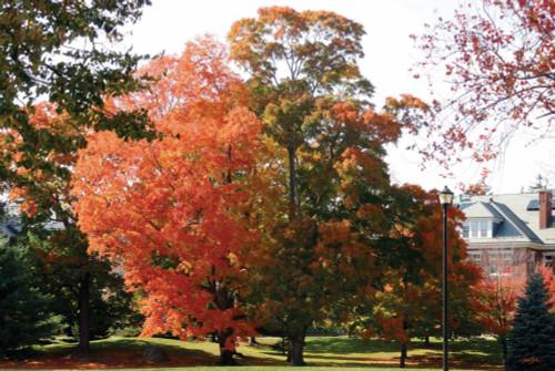 Autumnal 3 Poster Print by Diane Stimson - Item # VARPDXDSRC5001C