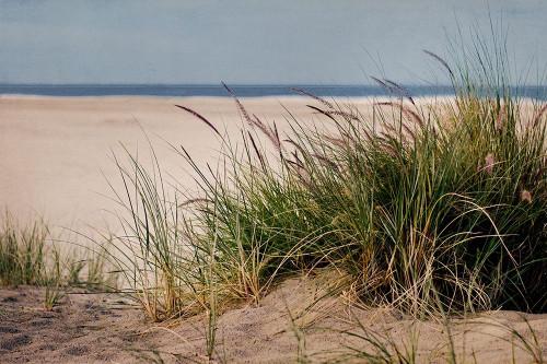 To The Beach II Poster Print by Elizabeth Urquhart - Item # VARPDXEU5RC001B