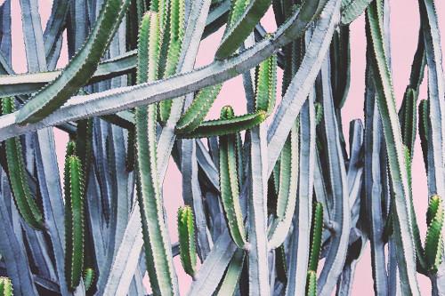 Pink Crush I Poster Print by Elizabeth Urquhart - Item # VARPDXEURC005B