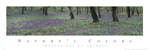 Natures Colors Purple Flowers Poster Print by Unknown Unknown - Item # VARPDXF102225