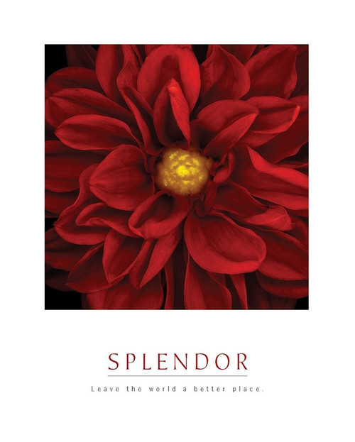 Splendor - Red Pool Poster Print by Unknown Unknown - Item # VARPDXF102234