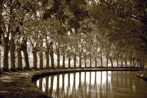 Tree Line at Pond Poster Print by Anonymous Anonymous - Item # VARPDXFAF1322