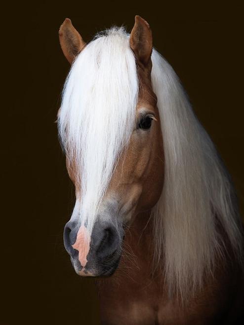 Stunning Stallion Poster Print by Nigel  Baker - Item # VARPDXFAF1381