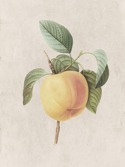 Fruity Botanic 1 Poster Print by Sheldon Lewis - Item # VARPDXSLBRC804A