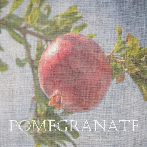 Pomegranate Poster Print by Sheldon Lewis - Item # VARPDXSLBSQ532A