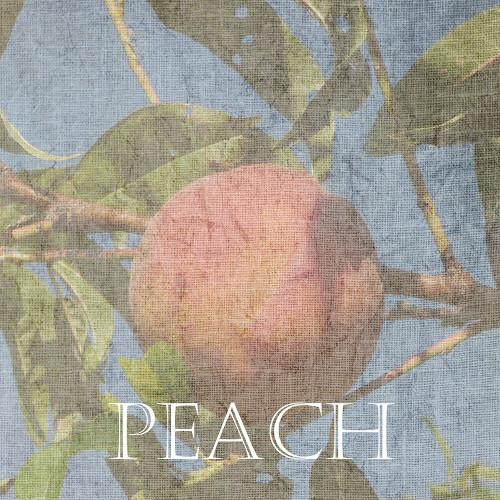 Peach Poster Print by Sheldon Lewis - Item # VARPDXSLBSQ532D