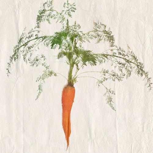 Carrot Poster Print by Sheldon Lewis - Item # VARPDXSLBSQ707B
