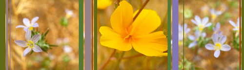Wildflowers Collage VI Poster Print by Popcorn Popcorn - Item # VARPDXWJTFLO00099