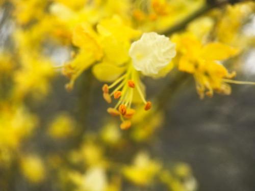 Tree In Bloom II Poster Print by Popcorn Popcorn - Item # VARPDXWJTFLO00116