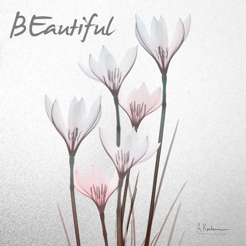 Beautiful White Rain Lily 1 Poster Print by Albert Koetsier # AK8SQ421A