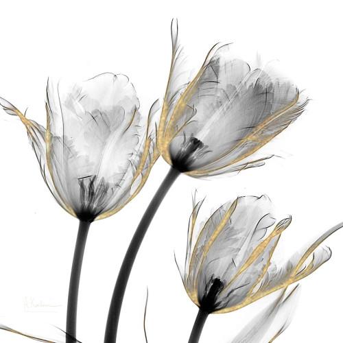 Gold Embellished Tulips 2 Poster Print by Albert Koetsier # AK8SQ222B