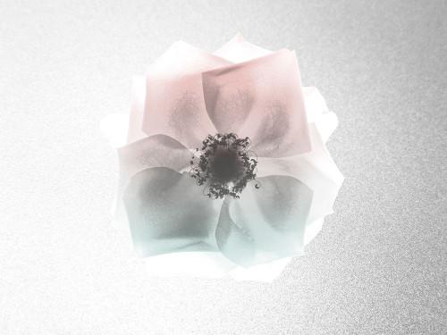 Rose Dreaming 1 Poster Print by Albert Koetsier # AK8RC415C2