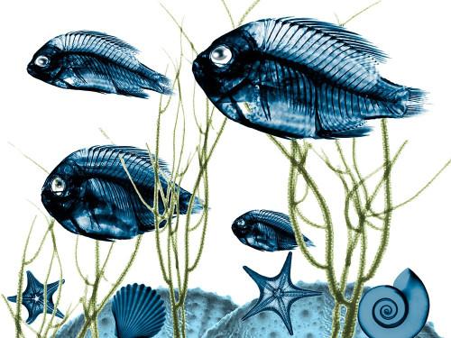 Aquatic Home 2 Poster Print by Albert Koetsier # AK8RC214B