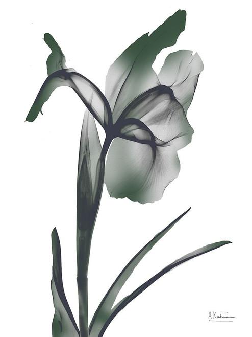 Ombre Jungle Iris 1 Poster Print by Albert Koetsier # AK8RC589B1