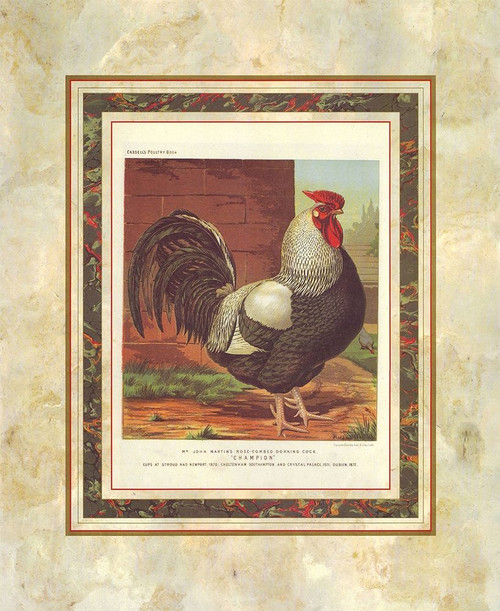 Rose-Combed Dorking Cock, Cassells Poultry Book Poster Print by J.W. Ludlow # A14128