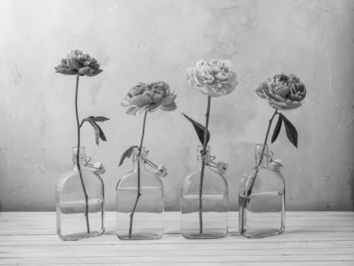 Peonies in glass bottles Poster Print by Assaf Frank # AF20160707261C05