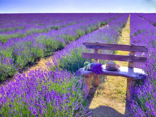 Bench in Lavender field Poster Print by Assaf Frank # AF20130708049X