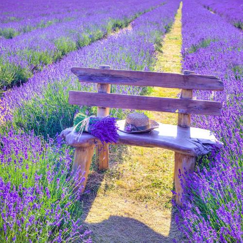 Bench in Lavender field Poster Print by Assaf Frank # AF20130708049XC01