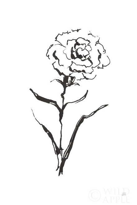 Line Carnation I Poster Print by Chris Paschke # 64186