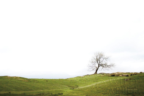 Dales Way I Poster Print by Laura Marshall # 63263