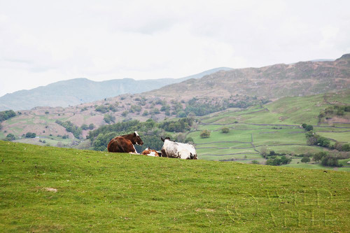 Lake District III Poster Print by Laura Marshall # 63273