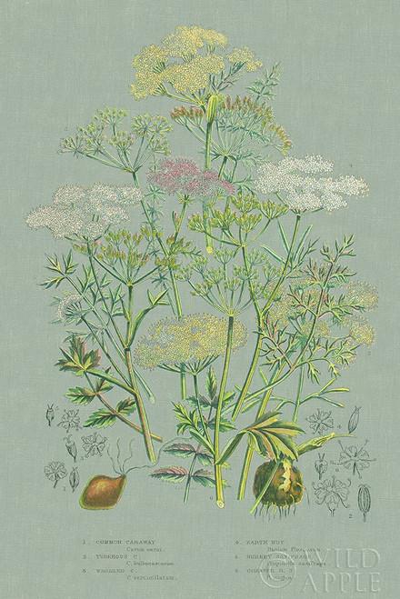 Flowering Plants II Green Linen Poster Print by Wild Apple Portfolio Wild Apple Portfolio # 63054