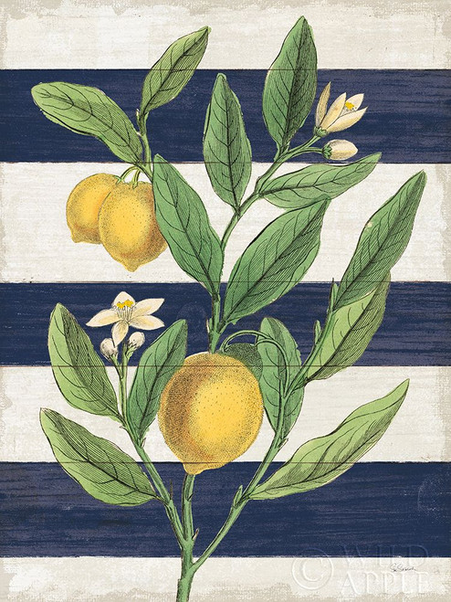 Classic Citrus V Navy Shiplap NW Poster Print by Sue Schlabach # 63070