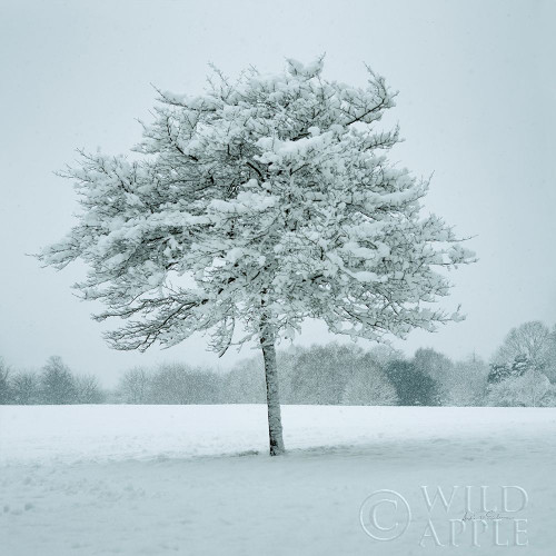 Winter Landscape IV Poster Print by Andre Eichman # 60922