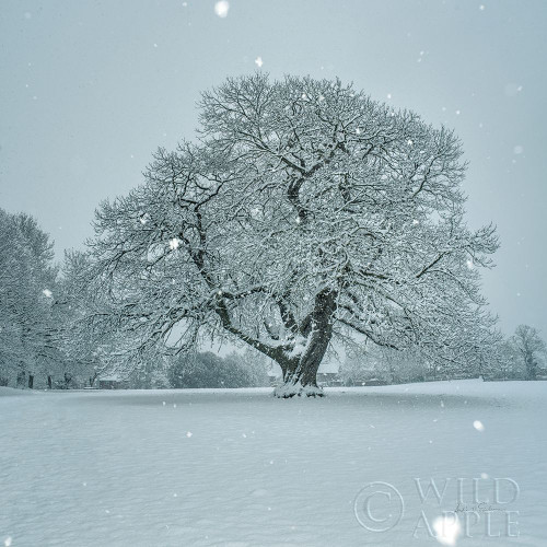 Winter Landscape III Poster Print by Andre Eichman # 60921