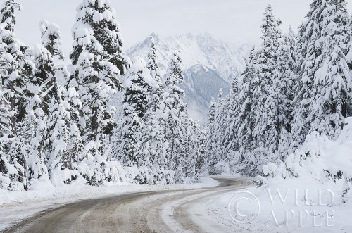 Mount Baker Highway I Poster Print by Alan Majchrowicz # 60619