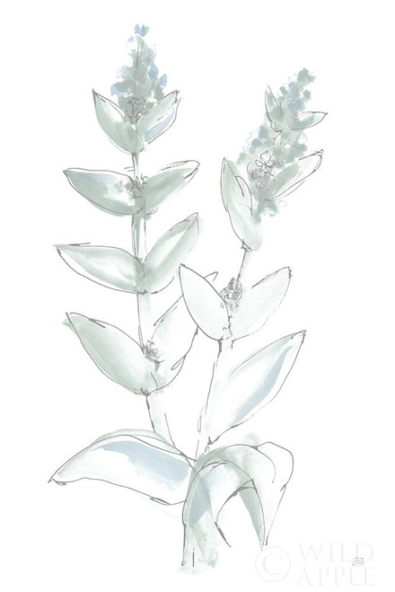 Lambs Ear Sage III Bleached Poster Print by Chris Paschke # 60294