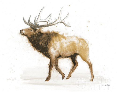 Elk v2 Warm Poster Print by James Wiens # 60221